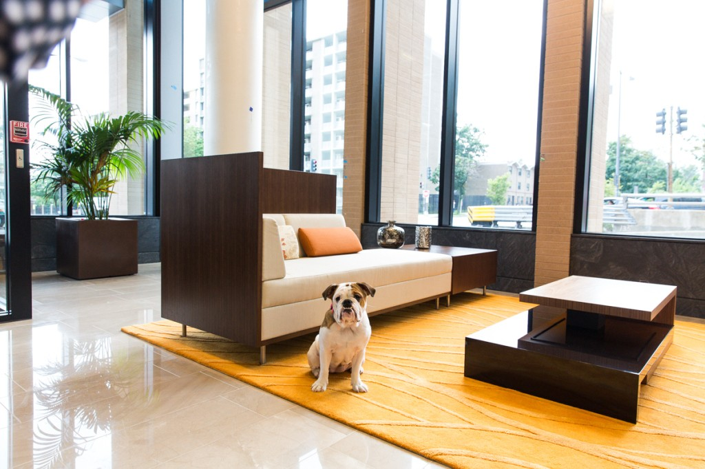 2M Street Luxury Pet Friendly Apartments in NoMa | Emmy the Resident Pup standing guard in the lobby