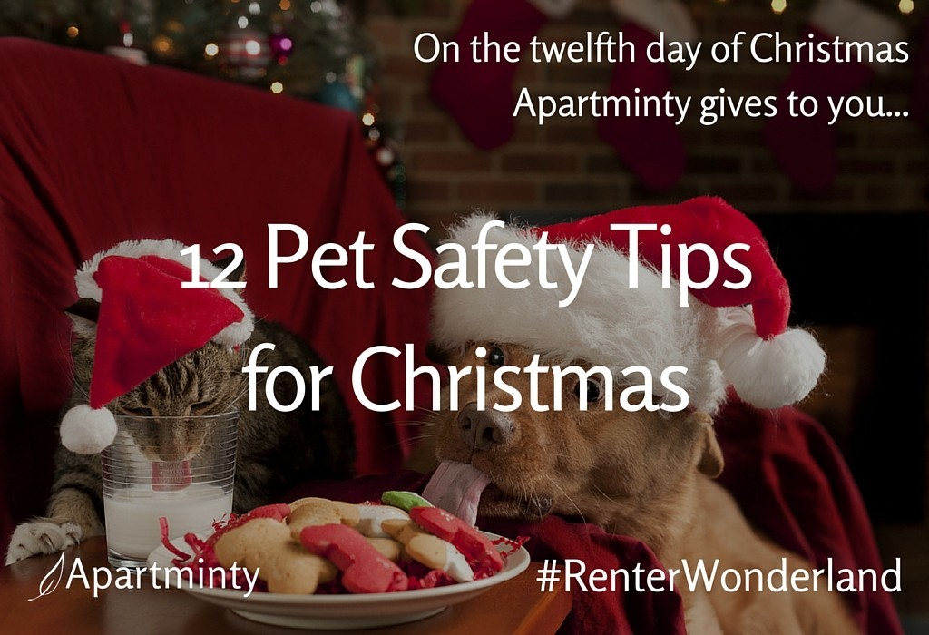 Renter Wonderland: 12 Days of Christmas