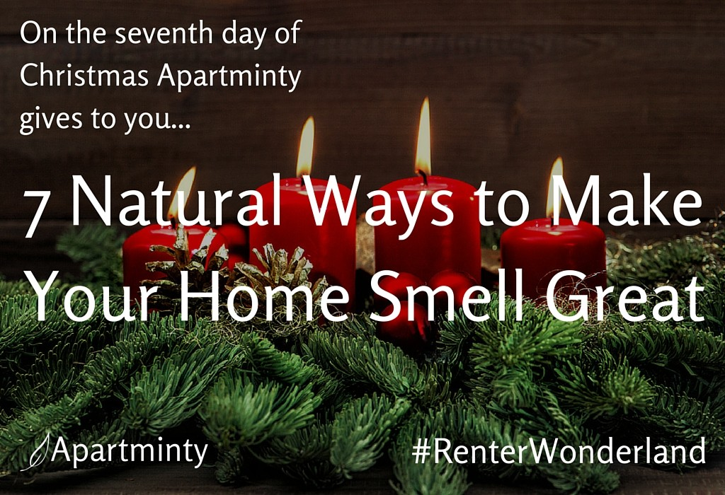 Renter Wonderland | 7 Natural Ways To Make Your Apartment Smell Great