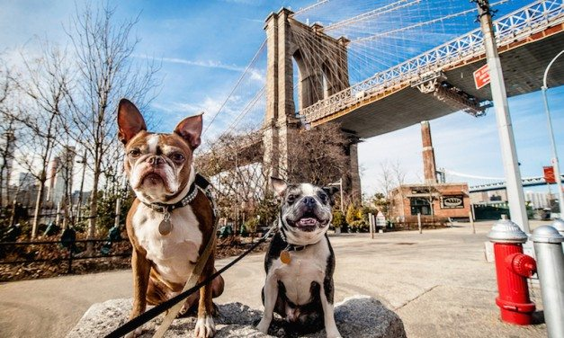 Pawsome Pet Friendly Cities To Call Home