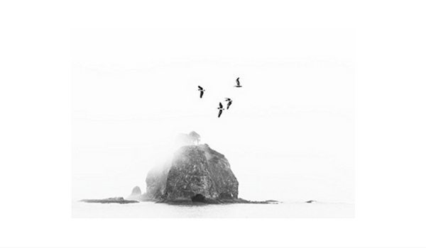 Apartminty Fresh Picks: Art For Your Gallery Wall | Birds Over Sea Stack By Kyle Goldie