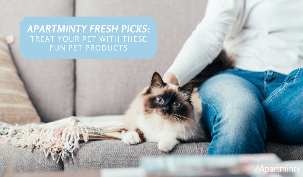 Apartminty Fresh Picks: treat Your Furry Friend With These Fun Pet Products