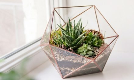 The Ultimate Guide To Creating A DIY Terrarium In Your Apartment