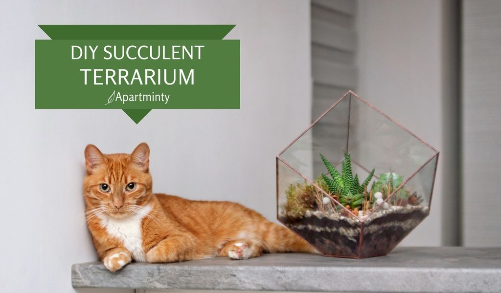 DIY Succulent Terrarium Guide For Your Apartment