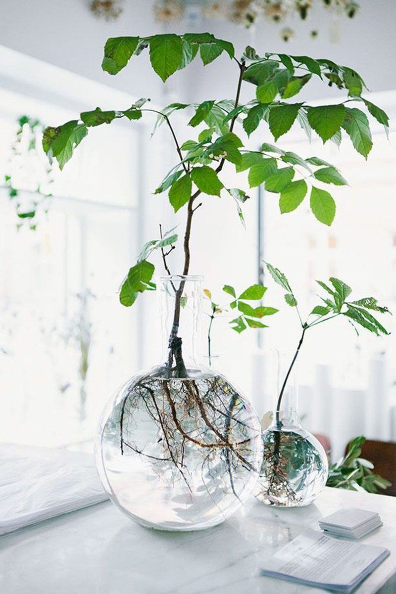 Pantone's Color Of The Year Greenery | Decorating Your Apartment | Decorating With House Plants