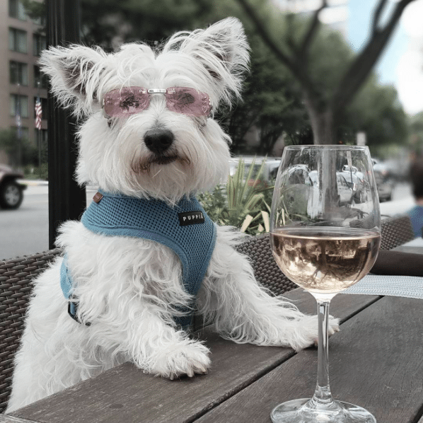 Dog-Friendly Restaurants DC