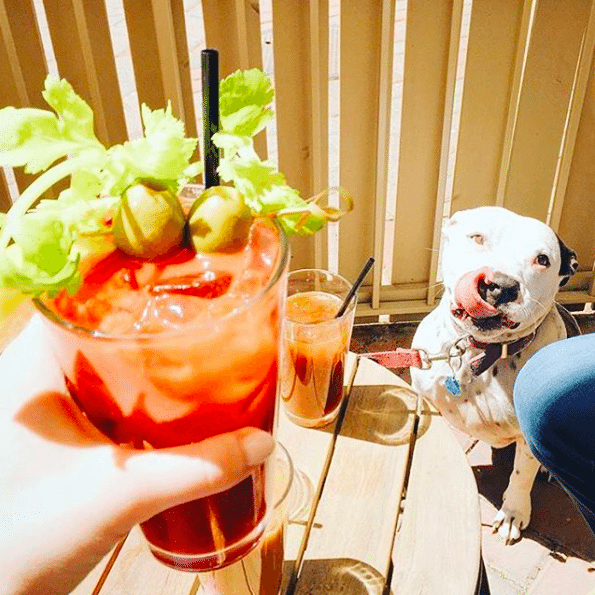 Dog Friendly Restaurants DC