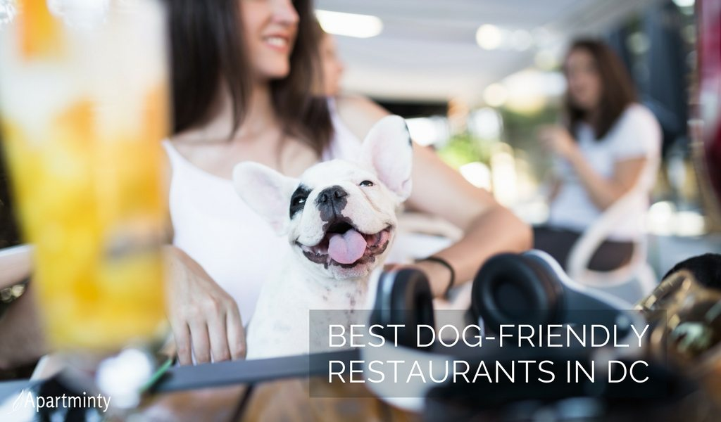 Best Dog Friendly Restaurants DC Has To Offer