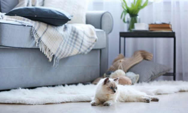 5 Cat-Friendly DC Apartment Buildings To Rent In Right Now
