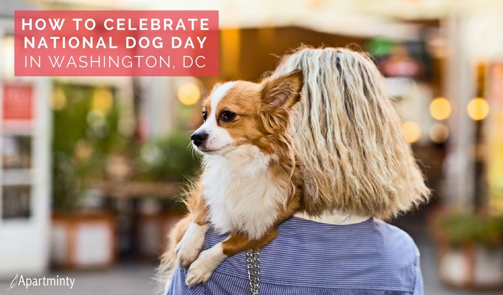 National Dog Day | Things To Do In Washington, DC