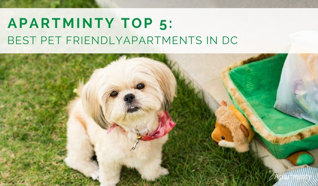Best-Dog-Friendly-Apartments-DC