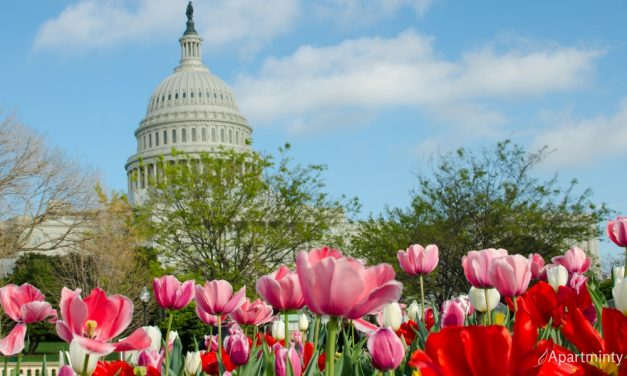 Can't Miss May Events in DC