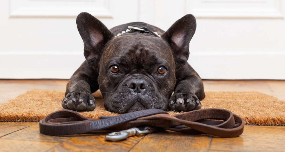 Moving Day Tips | Dog waiting at door with leash for dog-sitter